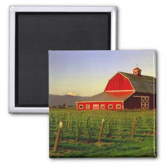 Evening sun on a barn in Washington's Skagit Magnet