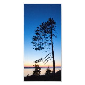 Evergreen at sunset, Lake Michigan, Michigan Photo