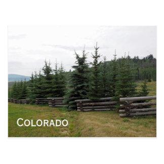 Evergreen trees in Colorado Postcard