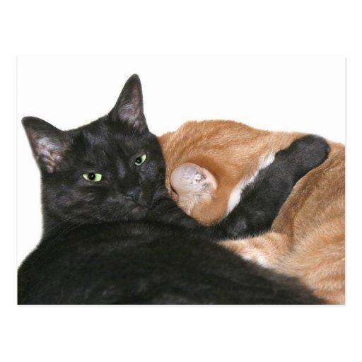 Everyone needs a hug post card