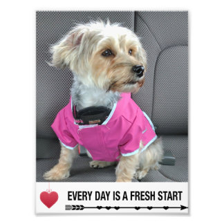 Everything Day is a Fresh Start Yorkipoo Card Photo Print