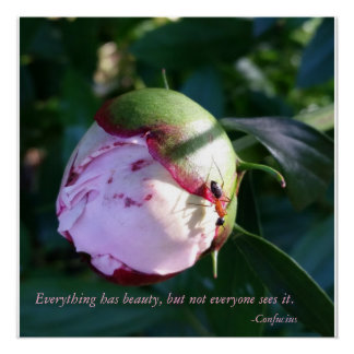 Everything Has Beauty Confucius quote With Flower