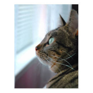 Evey the Kitty contemplates outside Postcard