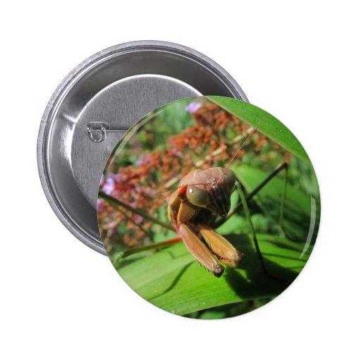 Evil Mantis ~ button