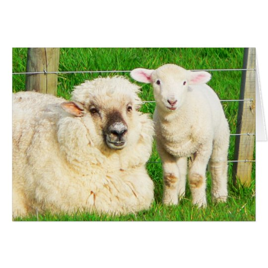 Ewe and Lamb Card