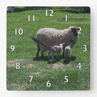Ewe with Twins Square Wall Clock