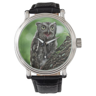Excited Screech Owl watch