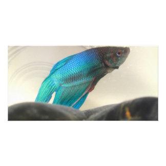 Exotic Betta Fish Closeup Picture Card
