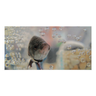 Exotic Betta Fish Looking At me Photo Card