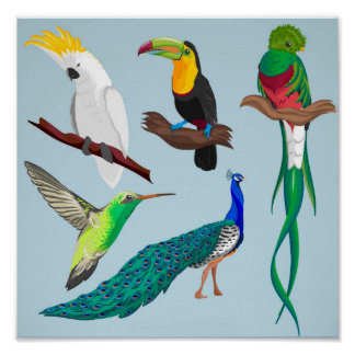 Exotic Birds Poster
