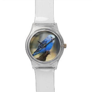 Exotic Budgie Bird Wrist Watches