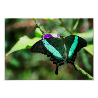 Exotic Emerald  Swallowtail Poster