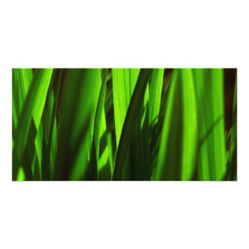 exotic grass - green photo card template