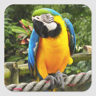 Exotic Macaw Parrot Square Sticker
