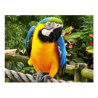 Exotic Parrot Postcard
