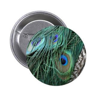 exotic peafowl feathers 6 cm round badge