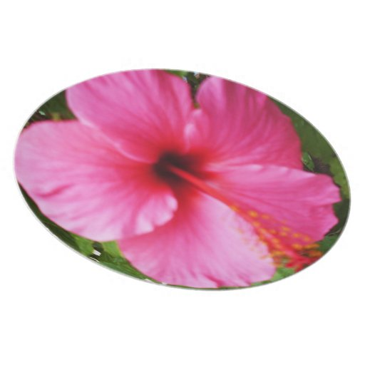 EXOTIC PINK FLOWER plate