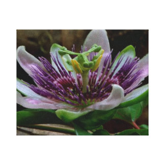 Exotic Purple Flower - Floral Decorations FUN Gallery Wrap Canvas