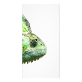Exotic Reptile Picture Card