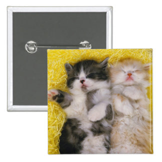 Exotic Shorthair; is Breeders crossed the 15 Cm Square Badge