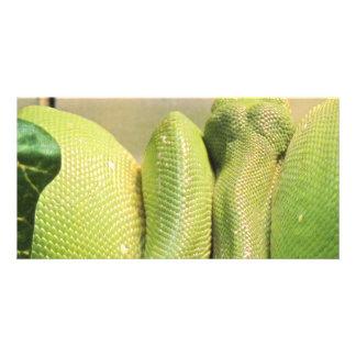 Exotic Snake Custom Photo Card