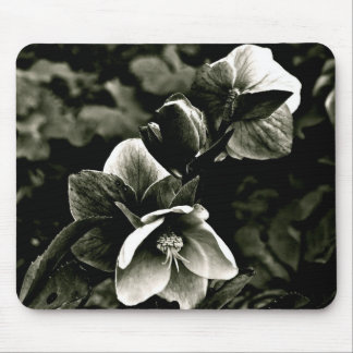 EXOTIC TREE FLOWERS IN BLACK AND WHITE MOUSE PAD