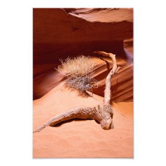Explore Arizona Photo Print