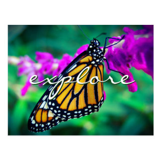 """Explore"" quote orange monarch butterfly photo Postcard"