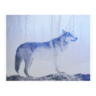 Exposed Wolf Postcard