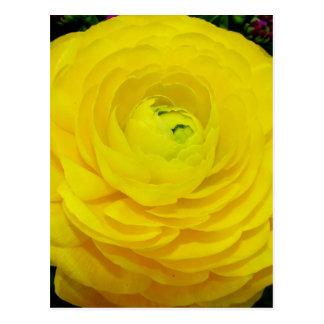 Exquisite Yellow Flower Postcard