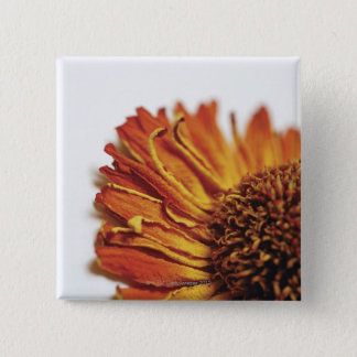 Extreme close-up of dried orange flower 15 cm square badge