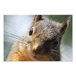 Extreme Closeup Squirrel Picture Photo Print