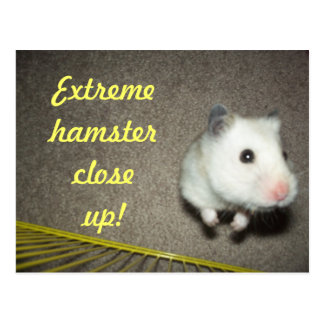 Extreme Hamster Close Up Postcard