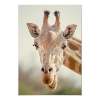 Eye contact with giraffe 9 cm x 13 cm invitation card