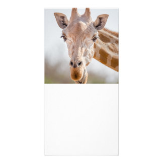 Eye contact with giraffe picture card