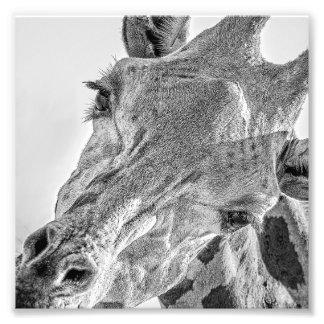 Eye contact with giraffe photo art