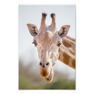 Eye contact with giraffe photo print