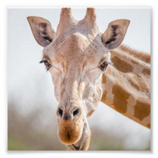 Eye contact with giraffe photographic print