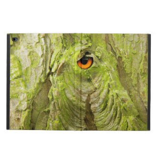 Eye in the Tree Bark