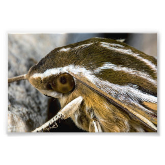 Eye of a Giant Moth Photographic Print