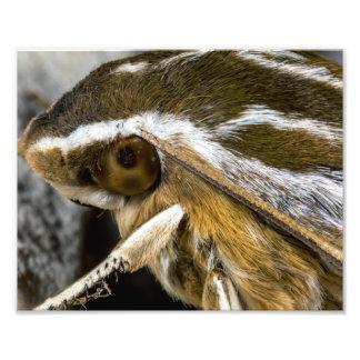 Eye of a Giant Moth Photo