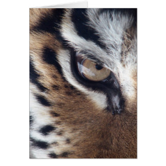 Eye of a Tiger Greeting Card