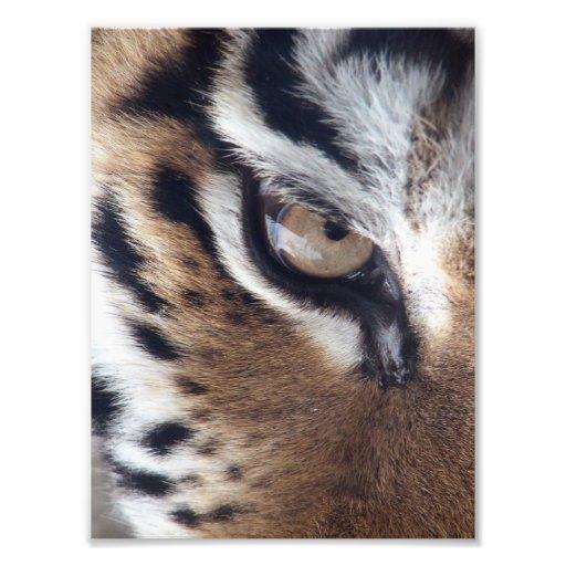 Eye of a Tiger Photo