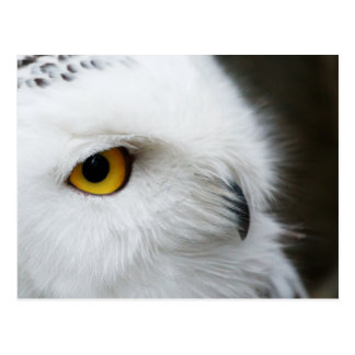 Eye of the Owl Postcard