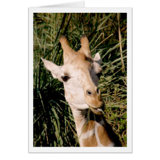 Eye to Eye with a Giraffe Note Card