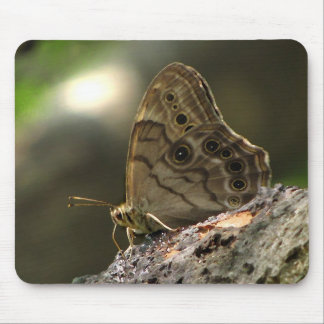Eyed Brown Butterfly Mouse Pad