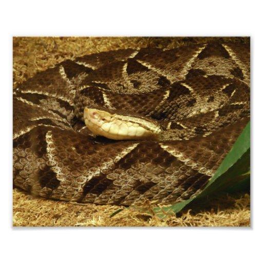 Eyeless Snake Photographic Print