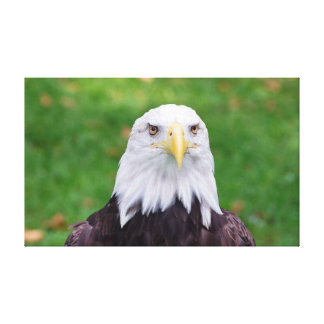 Eyes of an Eagle Canvas Print