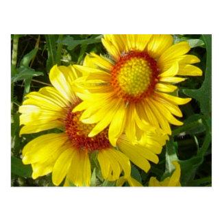 F0006 Yellow Wildflowers Postcard