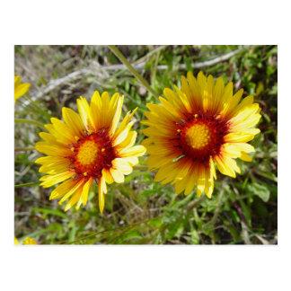 F0008 Yellow Wildflower Duet Postcard